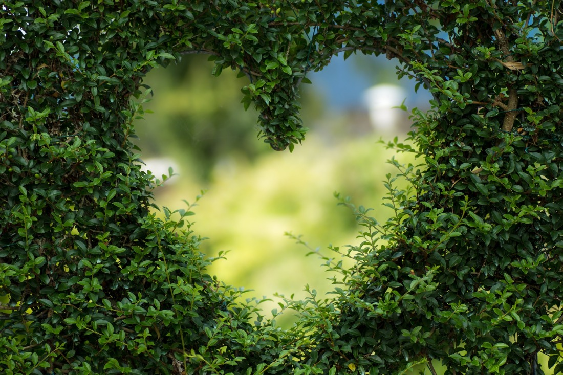 Green heart cut into a hedge