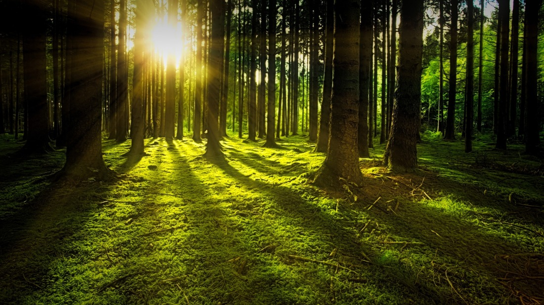 An emerald forest filtered by sunlight